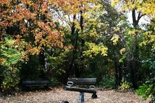 صور الخريف